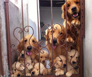 dog, family, and funny image
