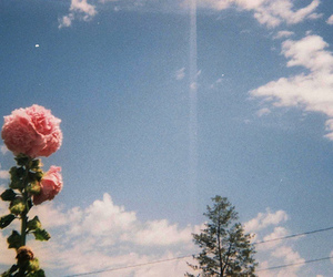 flowers, sky, and rose image