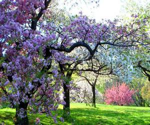 faerie, spring, and flowering trees image
