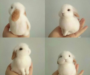 bunny, pet, and sweet image