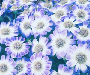 flowers, pretty, and spring image