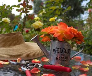garden, gardener, and gardening image