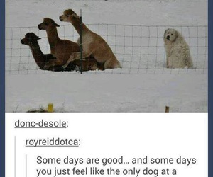 funny, lol, and dog image