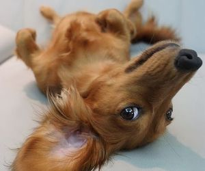 dog, adorable, and cute image