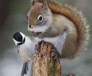 bird, squirrel, and cute image