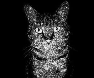 cat and dark shining cat image
