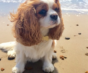 beach, puppy, and sand image
