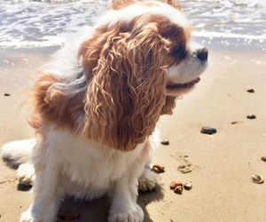 beach and puppy image