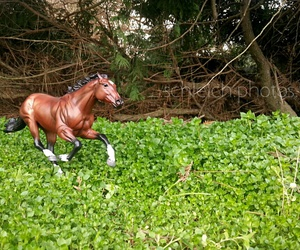 horse, photography, and breyer image