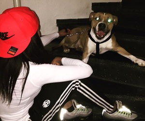 dog and nike image