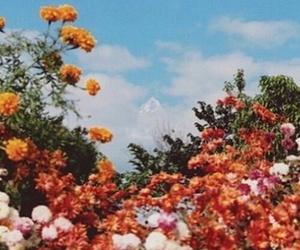 flowers, indie, and vintage image