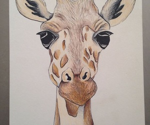 animal, drawing, and giraffe image