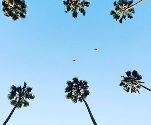 Dream, Lazy, and los angeles image