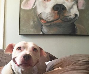 dog, smile, and animal image