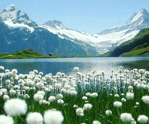 flowers, lake, and landscape image