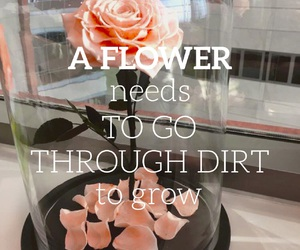 easel, flower, and font image