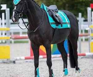 horse, cute, and blue image