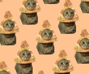 pizza cat image
