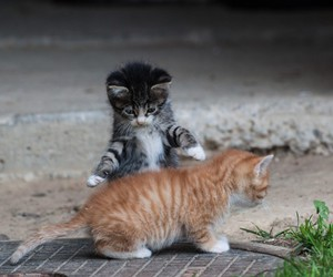 adorable, cat, and couple image