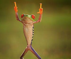 frog and animal image