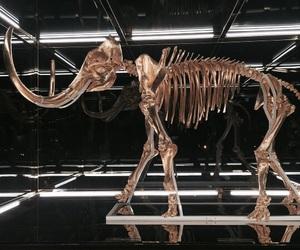 art and skeleton image