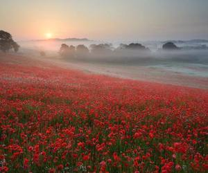 countryside, field, and poppies image