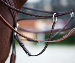 bridle, horse, and ride image