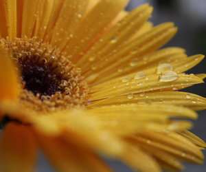 drops, flowers, and macro image