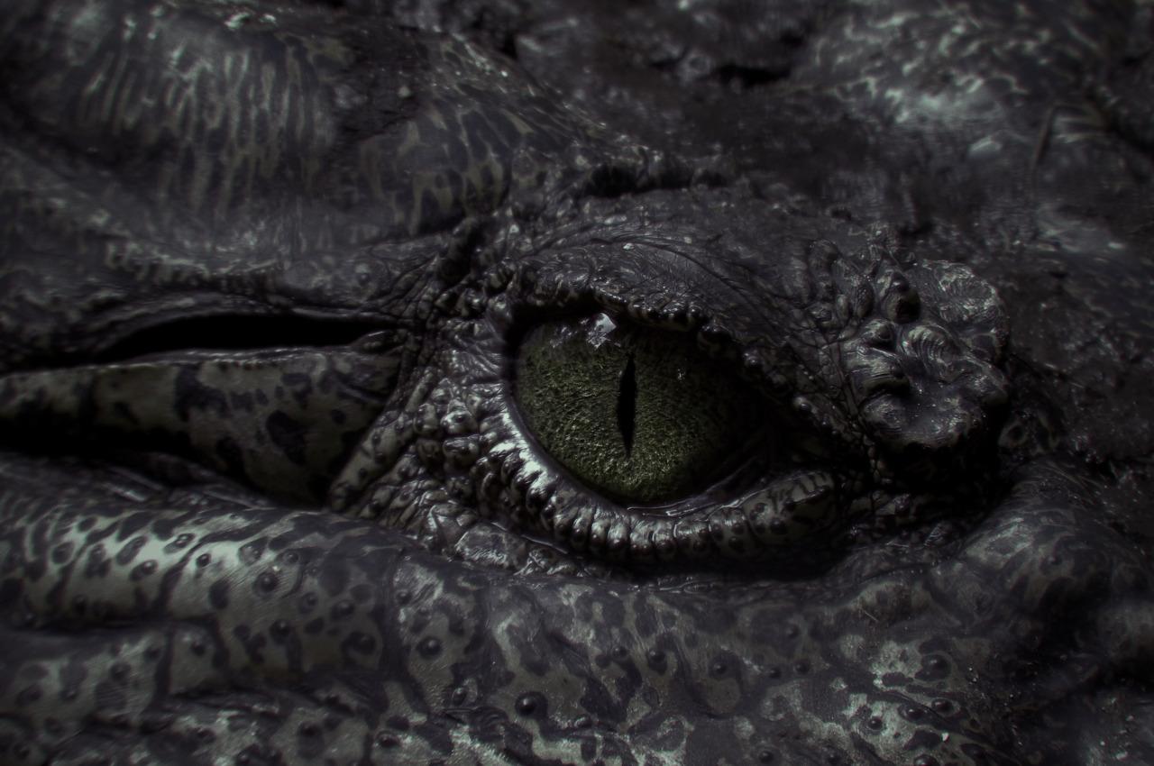 creature, dragon, and eye image