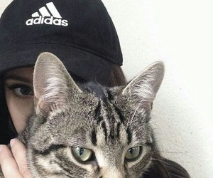cat, adidas, and tumblr image