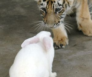 bunny, tiger, and cute image