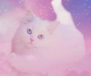 pastel, cat, and galaxy image