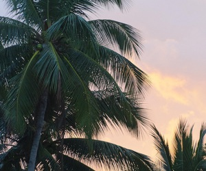 palm trees, summer, and tree image