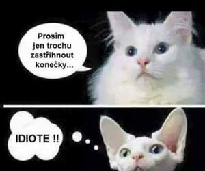 cat and joke image