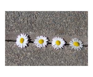 flowers, grunge, and movie image