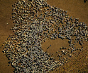 Yann Arthus-Bertrand, tierra, and del image