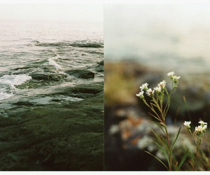 sea and flowers image