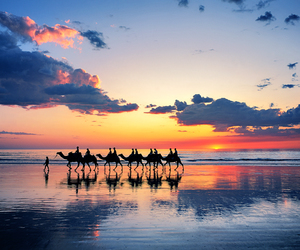 beach, sunset, and camel image