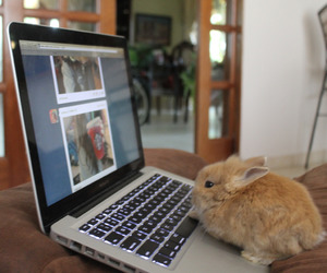 cute, tumblr, and bunny image