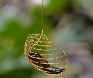 bug, caterpillar, and cocoon image
