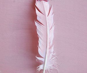 pink, feather, and color image