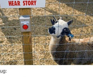 crazy, goat, and funny image