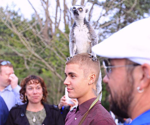 justin bieber, animal, and beliebers image