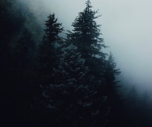 nature, dark, and forest image