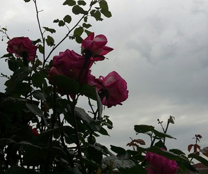 clouds, sky, and flowers image