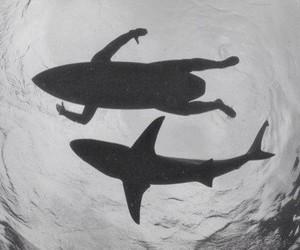 shark, surf, and sea image