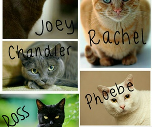 cat, cats, and chandler bing image