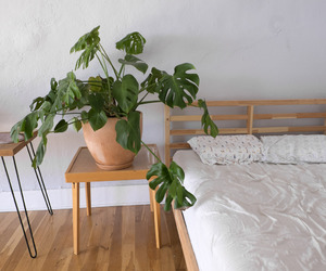 plants, bed, and bedroom image