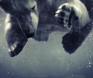 bear, water, and Polar Bear image