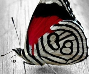 black, red, and white image